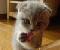 Cute-Cat-Puzzle